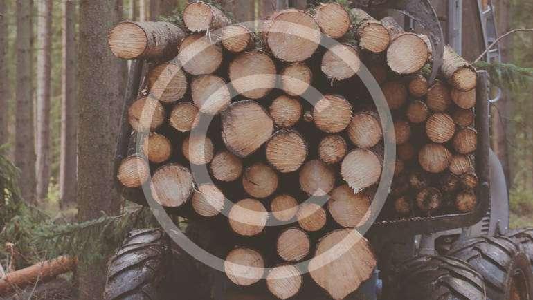 Récolte de bois